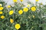 10_plants3-1